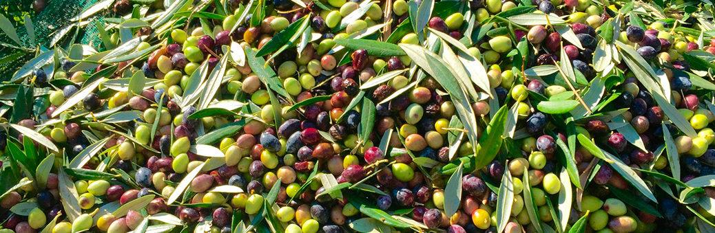 Оливки и оливковое масло в Алматы