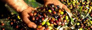 Размер и типы оливок