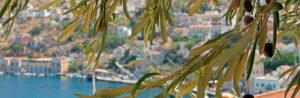 Оливковое дерево и оливковое масло - традиции в Греции