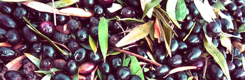 Почему стоит кушать оливки