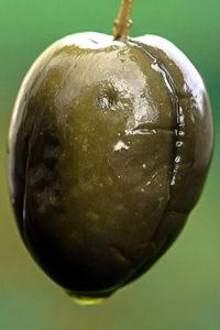 Оливка